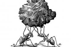Ant Builders