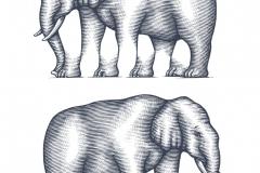 Elephant final art