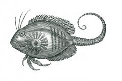 Fish_Tail_001