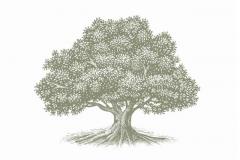 Old_Oak_Tree