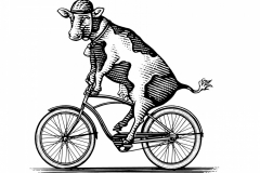 UC Davis Cow Bicycle art