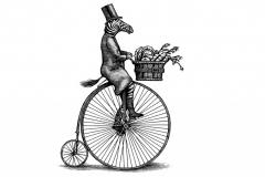 Zebra Cyclist