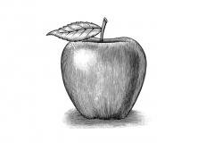 Apple Woodcut