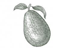 Avocado_001