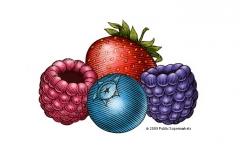 Berries-art-copy