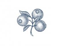 Blueberries-art