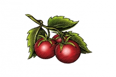 Cherry_Tomatoes_2