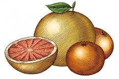 Citrus-art