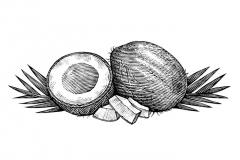 Coconut_Woodcut_001