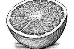 Grapefruit-Slice-