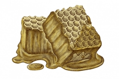Honeycomb art