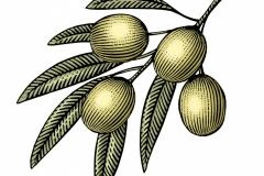 Olives art