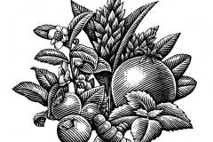Organic Ingredients art