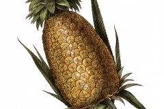 Pineapple art - color