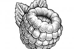 Raspberry-