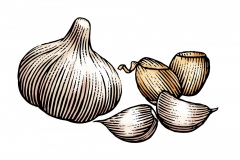Roasted Garlic final art
