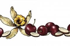 Vanilla & Cherries - Almonds