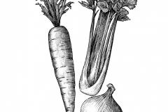 Vegetables art