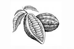 cacao_pods