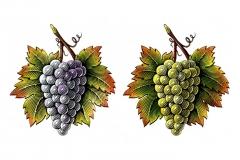 cakebread_grapes_02