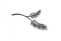 Pine-_Branch
