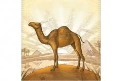 Desert_Camel