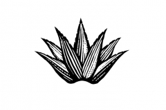 Agave Icon