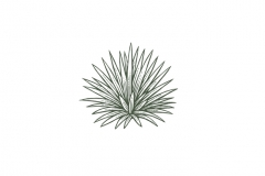 Agave-Plant_Icon