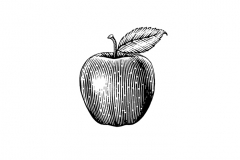 Apple-Art-001