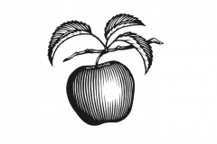 Apple_Woodcut_2