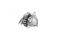 Bee-art-001