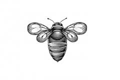 Bee_icon