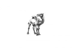 Camel-Art-copy