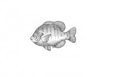 Fish-icon-_001