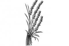 Lavender-art-