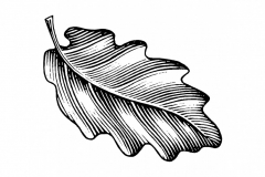 Oak Leaf Icon 2