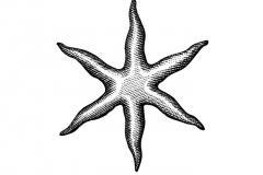 Star-art-