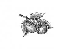 Tomatoes-art-1