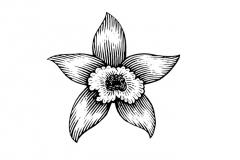 Vanilla Flower Icon