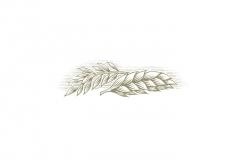 Wheat-Oats-art-3