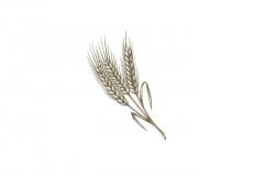 Wheat-art-001