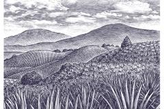 Agave_landscape
