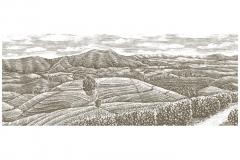 Dilmah_Tea-Fields