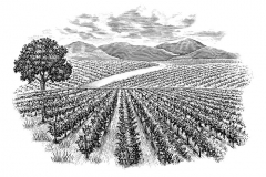 Earth-Wise-Vineyards