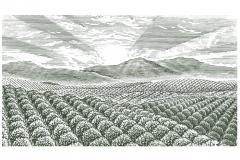 Farm_Orchards