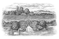 Fountain_Vineyards