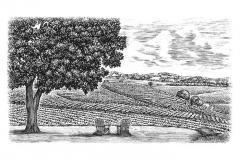 Hidden-Spring-Vineyards-Final-art-