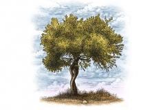 Olive-tree-art-color-1