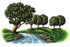 Orange-Grove-Art