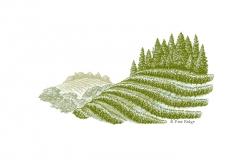 Rev-Pine-Ridge-final-art-color